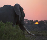 Elephant sunset - South Africa