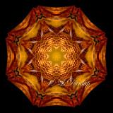** Milkweed 1 (In Warm Light) -- Northwoods Kaleidoscope