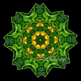 * Yellow Lady Slippers With Leaves -- Northwoods Kaleidoscope