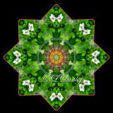 * Canadian Dogwood Star -- Northwoods Kaleidoscope