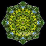 Spring Birch Against Sky -- Northwoods Kaleidoscope