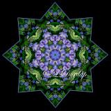 * Lupine Star -- Northwoods Kaleidoscopes