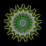 * Lupine Fan With Backlit Grass Seeds -- Northwoods Kaleidoscope