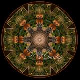 * Shaggy Mane Mushroom -- Northwoods Kaleidoscope