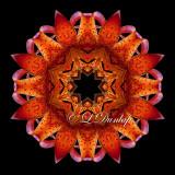 Michigan Lily -- Northwoods Kaleidoscope