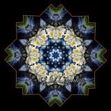 Waterlily On Pond -- Northwoods Kaleidoscope