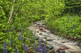 75.7 - Schroeder Lupine Creek