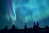 Auroras
