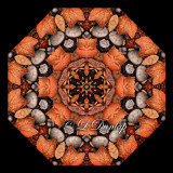 Dried Autumn Leaves and Stones -- Northwoods Kaleidoscope
