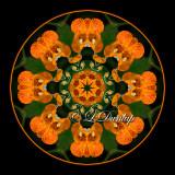Jewelweed 2 -- Northwoods Kaleidoscope