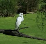 Healsville Sanctuary, Melbourne...