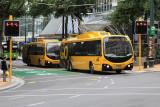 Yellow buses - Wellington City.