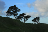 3 Trees on One Tree Hill
