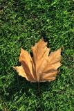 Dawn's Leaf :-))))
