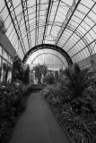 Inside one of the glass houses...Wintergarden - Auckland.