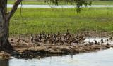 Yellow Waters - Kakadu National Park, Northern Territory