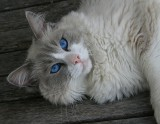 Blue eyed beauty.