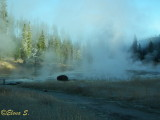 Fumaroles with bison