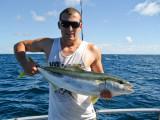 Cavelli Island Yellowtail Kingfish