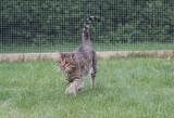 Morritz in our outdoor enclosure