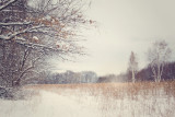 *224, Marshlands, Rye