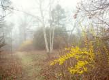 197, Spring Path, Larchmont