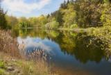 *207, Lake at Lasdon Park, Somers