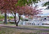 267, Mamaroneck Harbor