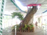 14 Ananthaazhwan Magizhiyamaram.jpg