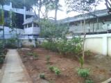 22 View of Thottam.jpg