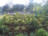 24 View of Thottam.jpg