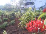 26 View of Thottam.jpg