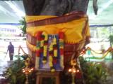 36 Ananthaazhwan Magizha maram decorated with Thiruvengadamudaiyan Vasthram.jpg