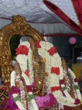 Perumal Kovil Sri Varadan Purappadu - Avani Hastham