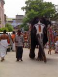 01_2011_Srivilliputtur_Thiruvaadipuram_Day08_Morning_YaanaiVarumMunne.JPG