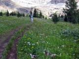 Wild flower meadow below mt richardson