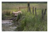 Weekly Pics Apr 30-May 6, 2011