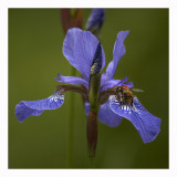 Weekly Pics May 14-20, 2011