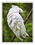 Binder Park zoo bird