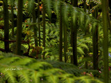 Miniature Jungle