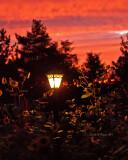 Weekly Pics Sep 3-9, 2011
