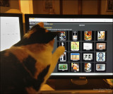 My cat votes for her favorite gallery