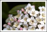 Weekly Pics April 7-13, 2012