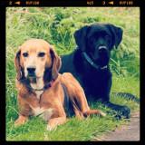 Retro Dogs