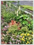 My front garden....