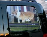 Driver side rear window screen