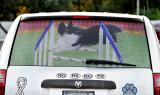 Grand Caravan rear window screen