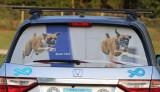 Honda Odyssey rear window screen