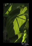 182:366Through the Green