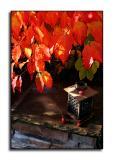 Lantern  November 6